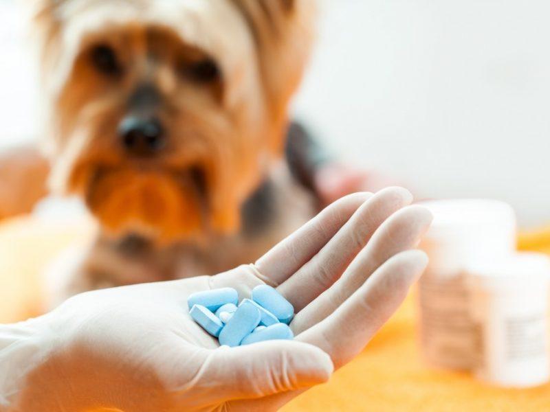 cascade-custom-pharmacy-compounded-ped-meds-2-1024x683